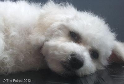 Dog Grooming Horsham